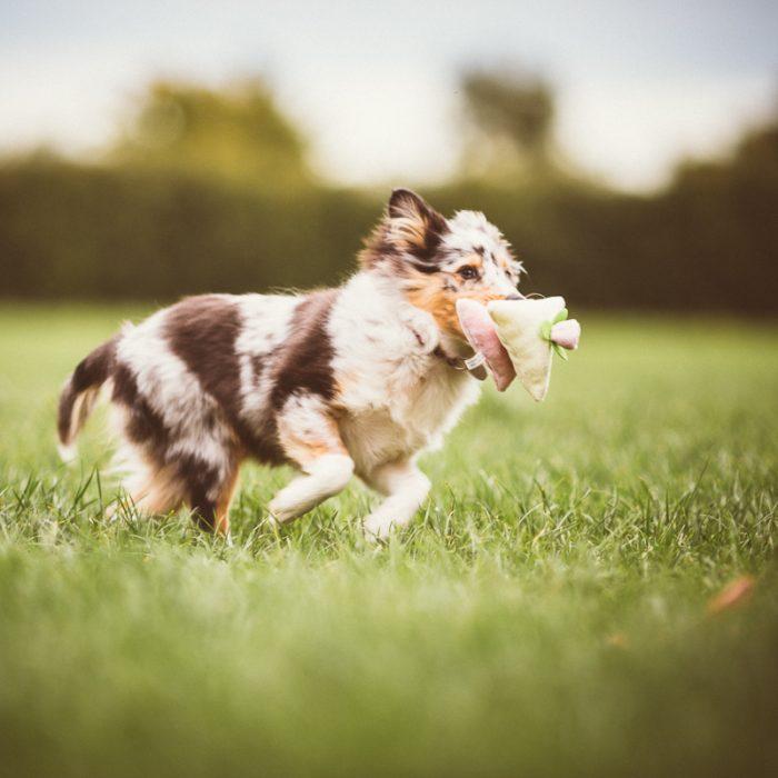 Where Can I Walk My Dog In Norfolk